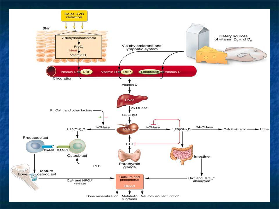 Funzioni della Vitamina D A livello intestinale attiva l ' assorbimento del Calcio e aumenta l ' assorbimento del Fosforo A livello renale attiva il riassorbimento tubulare del Fosforo, degli Aminoacidi e degli Zuccheri A livello osseo attiva la deposizione dei Sali di Calcio e Fosforo, favorendo la mineralizzazione dello scheletro; parallelamente controlla il riassorbimento del Calcio già depositato Controlla il metabolismo dei Citrati A livello intestinale attiva l ' assorbimento del Calcio e aumenta l ' assorbimento del Fosforo A livello renale attiva il riassorbimento tubulare del Fosforo, degli Aminoacidi e degli Zuccheri A livello osseo attiva la deposizione dei Sali di Calcio e Fosforo, favorendo la mineralizzazione dello scheletro; parallelamente controlla il riassorbimento del Calcio già depositato Controlla il metabolismo dei Citrati