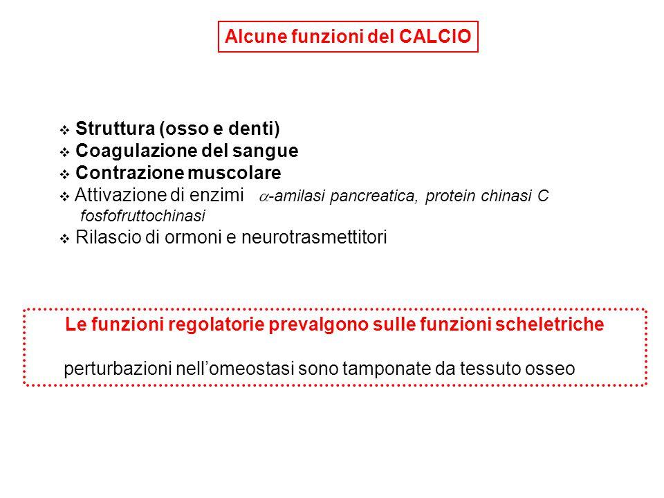 Scarsa tolleranza alle deviazioni di [Ca ++ ]:  Ipocalciemia: ipereccitabilità, convulsioni tetaniche  Ipercalciemia: paralisi muscolare, coma Ormoni di controllo di [Ca ++ ]:  Ormone paratiroideo (PTH)  Vitamina D Adulto: Calcio corporeo (1000 - 1200 g ) Livello plasmatico = 10 (9-11) mg/dL (2.4 mM) 50% ione non complessato - fisiologicamente attivo 40% legato a proteine (albumina) 10% sale fosfato, citrato, bicarbonato