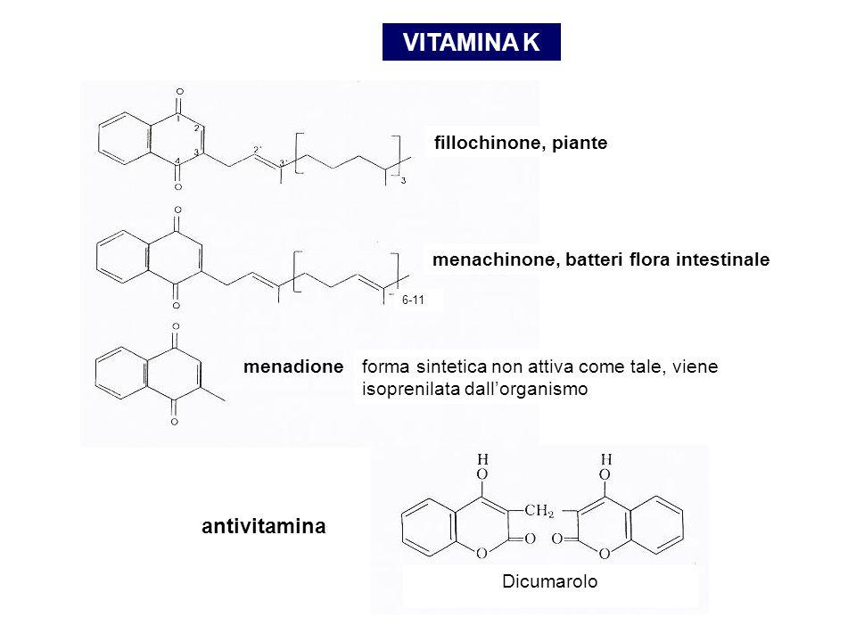 VITAMINA K fillochinone, piante menachinone, batteri flora intestinale 6-11 forma sintetica non attiva come tale, viene isoprenilata dall'organismo menadione Dicumarolo antivitamina