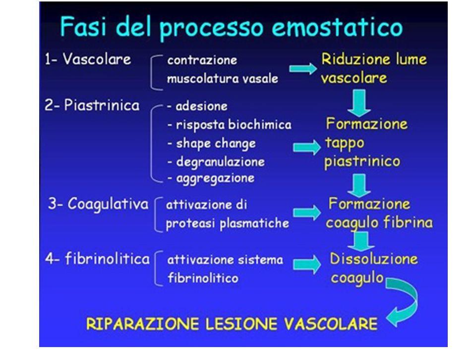 Via Intrinseca Quando il plasma viene a contatto con superfici negative avremo una sia pur bassa attivazione del fattore XIIa.