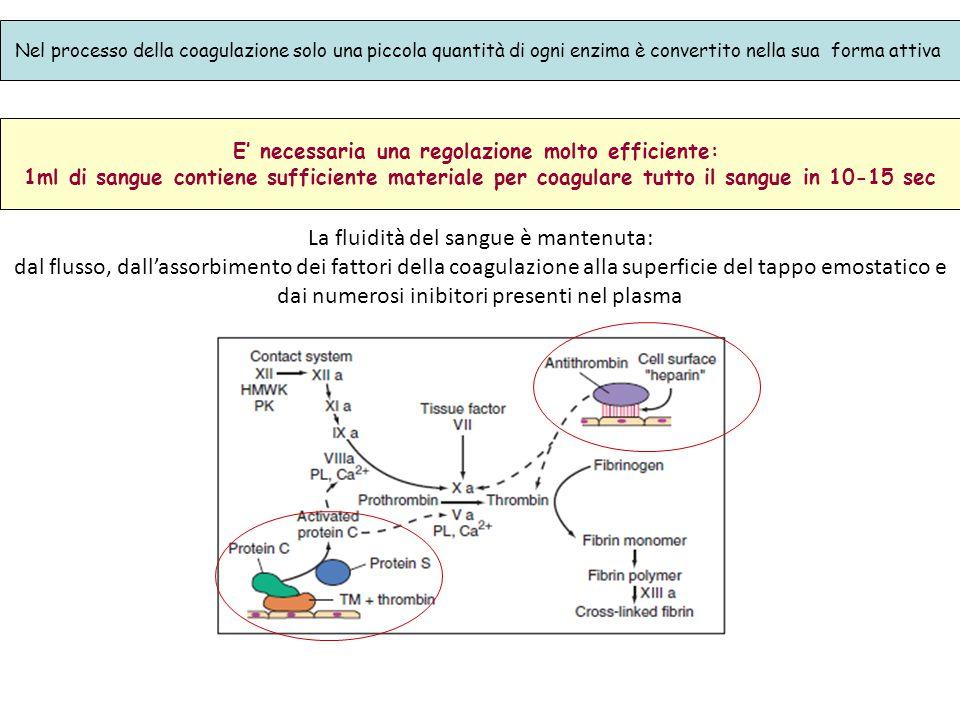 Nel processo della coagulazione solo una piccola quantità di ogni enzima è convertito nella sua forma attiva E' necessaria una regolazione molto effic