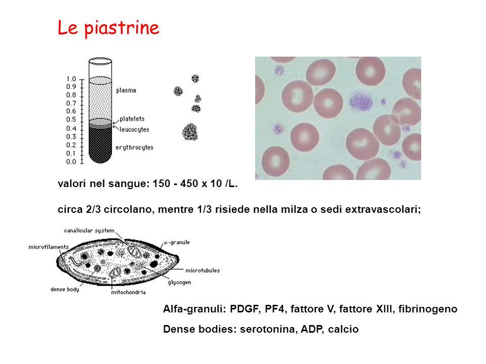 valori nel sangue: 150 - 450 x 10 /L. circa 2/3 circolano, mentre 1/3 risiede nella milza o sedi extravascolari; Alfa-granuli: PDGF, PF4, fattore V, f