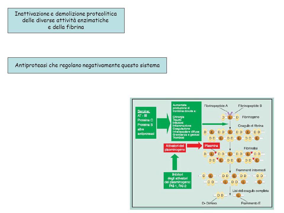Inattivazione e demolizione proteolitica delle diverse attività enzimatiche e della fibrina Antiproteasi che regolano negativamente questo sistema