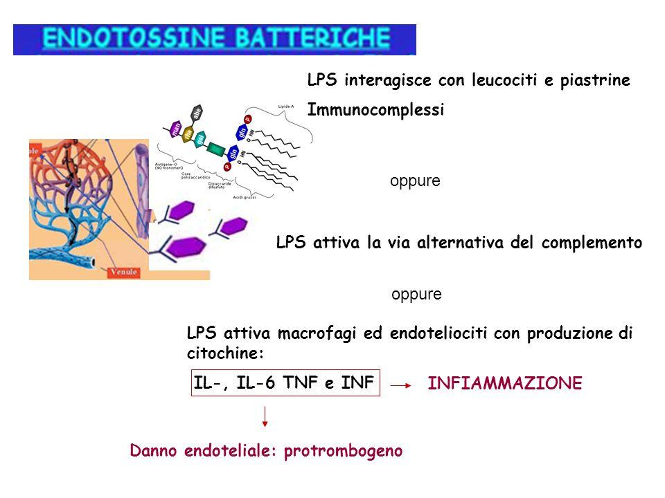LPS interagisce con leucociti e piastrine Immunocomplessi oppure LPS attiva la via alternativa del complemento oppure LPS attiva macrofagi ed endoteli