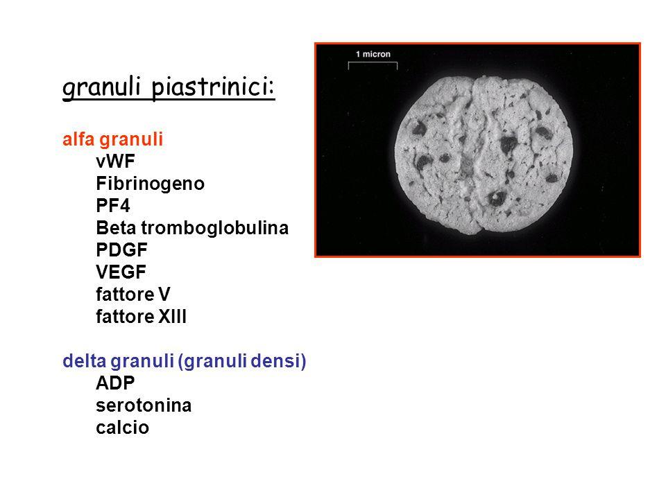 Ruolo delle piastrine nell'emostasi Step 1: Adesione Step 2: Rilascio contenuto dei granuli (ADP, trombina, catecolamine) Step 3: Aggregazione Step 4: Formazione del coagulo (fibrina) Step 5: Retrazione del coagulo