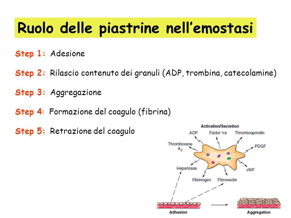 GPIa/GPIIa lega il collageno GPIc/GPIIa lega la laminina GPIc/GPIIa lega la fibronectina GPIb lega il fattore di Von Willebrand