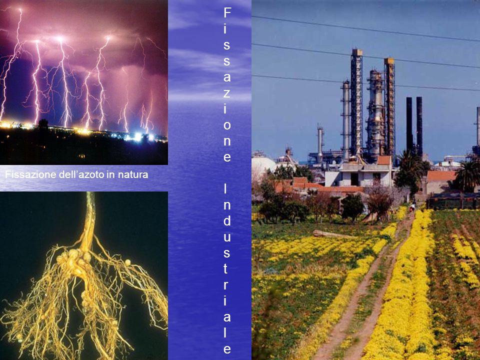 Fissazione dell'azoto in natura Fissazione IndustrialeFissazione Industriale