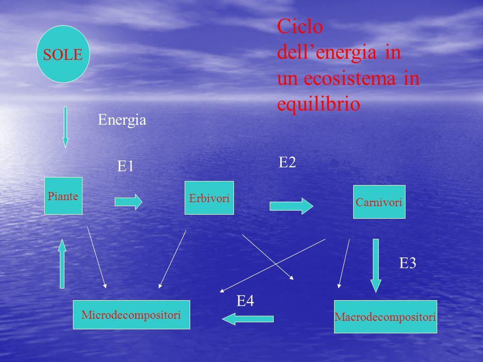 Ciclo dell'energia in un ecosistema in equilibrio SOLE Energia Piante Erbivori E1 Carnivori E2 Macrodecompositori Microdecompositori E3 E4