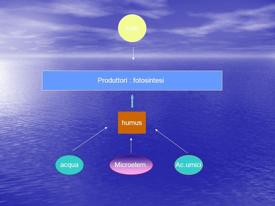 Produttori : fotosintesi sole humus acquaMicroelem.Ac.umici