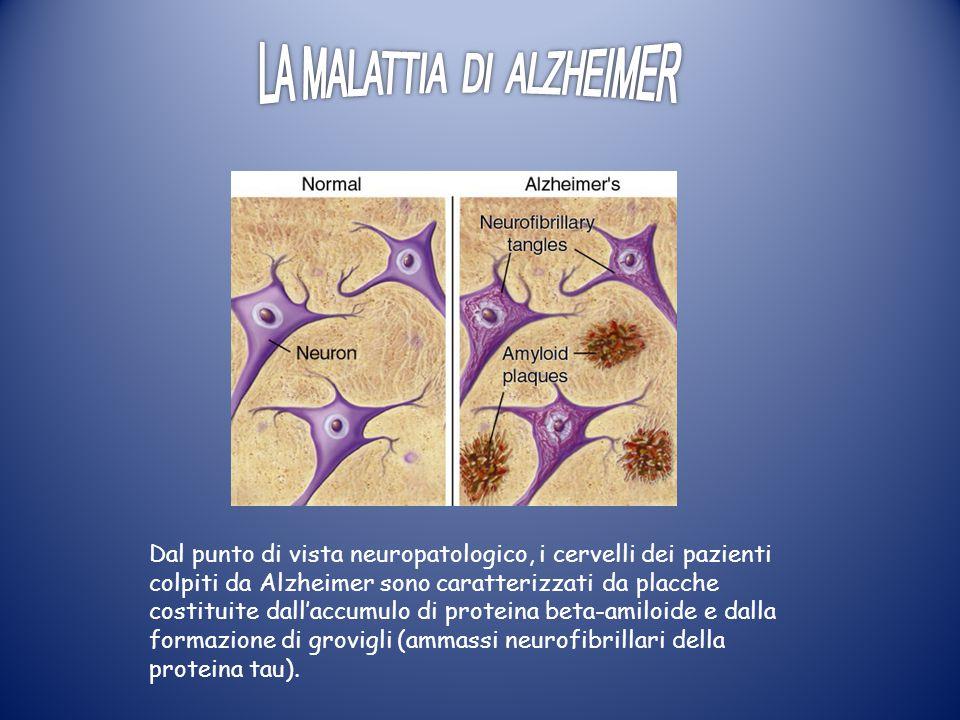 Dal punto di vista neuropatologico, i cervelli dei pazienti colpiti da Alzheimer sono caratterizzati da placche costituite dall'accumulo di proteina beta-amiloide e dalla formazione di grovigli (ammassi neurofibrillari della proteina tau).