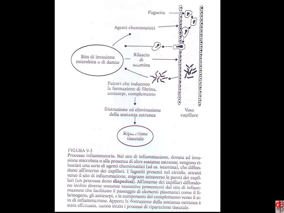 http://www.microbiologia.unige.it/dpb/debbia.htm Dinamica delle Popolazioni Batteriche 102