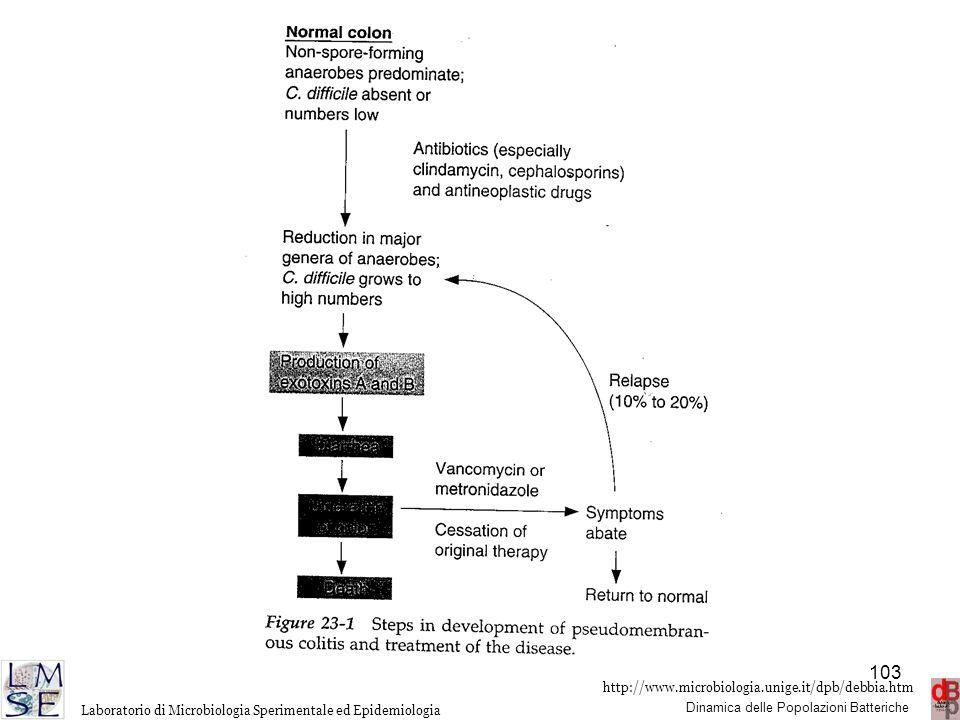 http://www.microbiologia.unige.it/dpb/debbia.htm Dinamica delle Popolazioni Batteriche Laboratorio di Microbiologia Sperimentale ed Epidemiologia 103