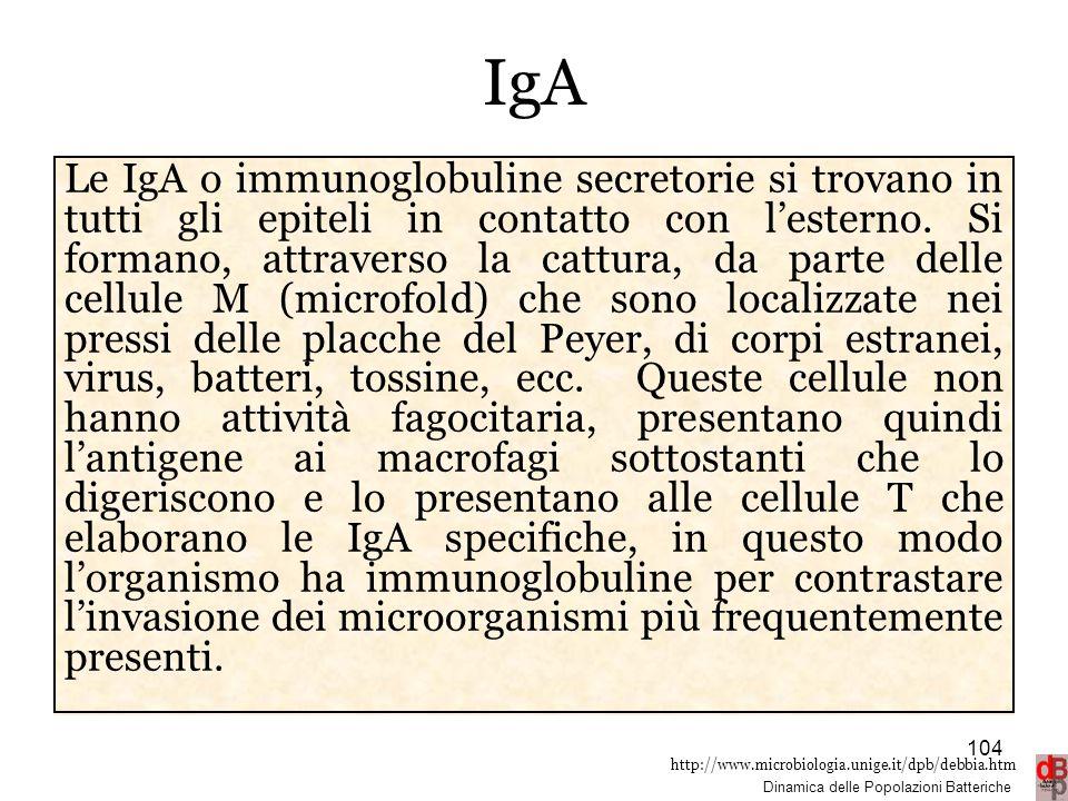 http://www.microbiologia.unige.it/dpb/debbia.htm Dinamica delle Popolazioni Batteriche IgA Le IgA o immunoglobuline secretorie si trovano in tutti gli