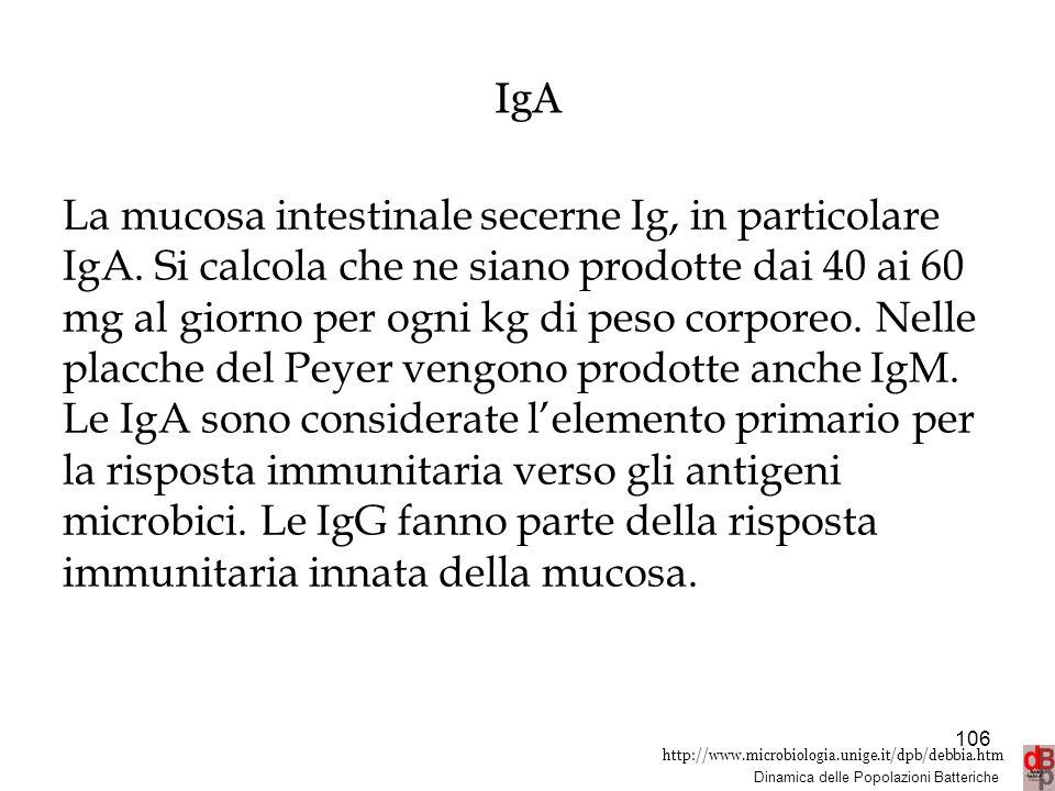 http://www.microbiologia.unige.it/dpb/debbia.htm Dinamica delle Popolazioni Batteriche 106 IgA La mucosa intestinale secerne Ig, in particolare IgA. S