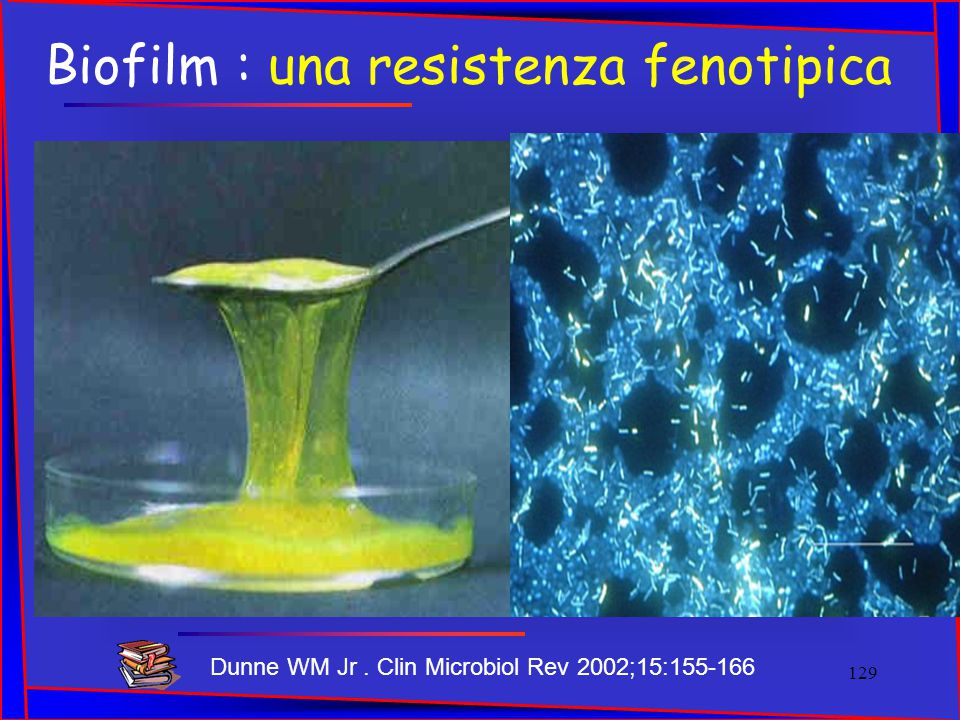 Biofilm : una resistenza fenotipica Dunne WM Jr. Clin Microbiol Rev 2002;15:155-166 129