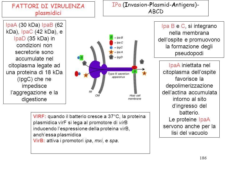 IPa (Invasion-Plasmid-Antigens)- ABCD Ipa B e C, si integrano nella membrana dell'ospite e promuovono la formazione degli pseudopodi FATTORI DI VIRULE