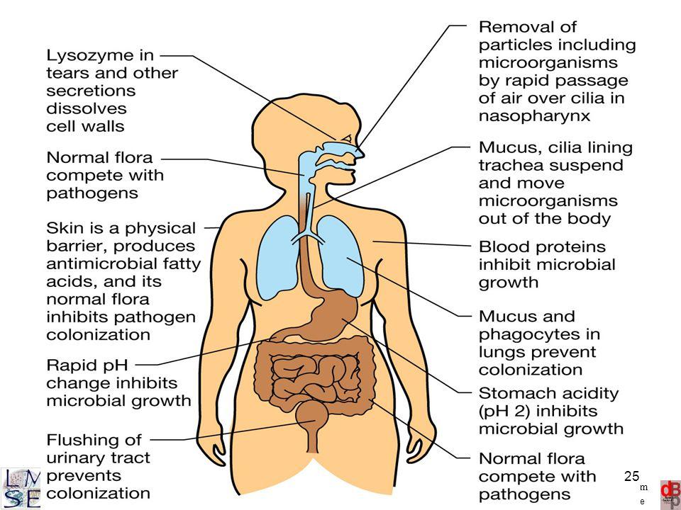 http://www.microbiologia.unige.it/dpb/debbia.htm Dinamica delle Popolazioni Batteriche Laboratorio di Microbiologia Sperimentale ed Epidemiologia 25