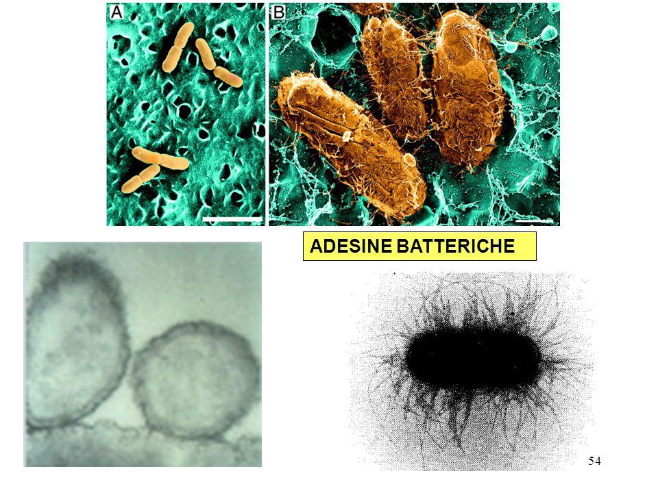 ADESINE BATTERICHE 54
