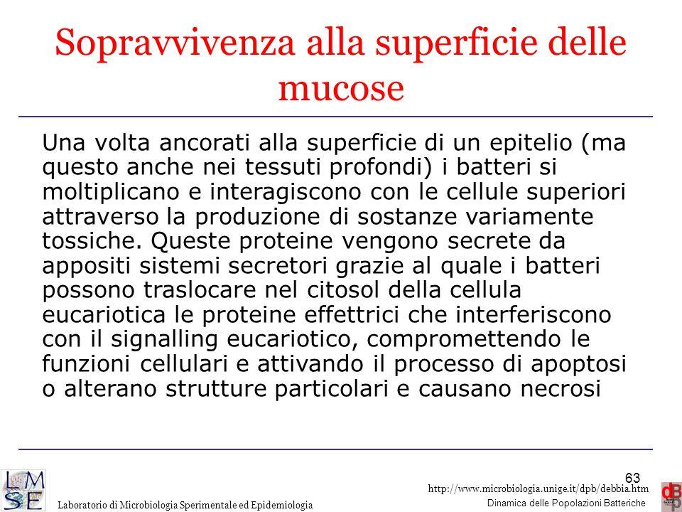 http://www.microbiologia.unige.it/dpb/debbia.htm Dinamica delle Popolazioni Batteriche Laboratorio di Microbiologia Sperimentale ed Epidemiologia Sopr