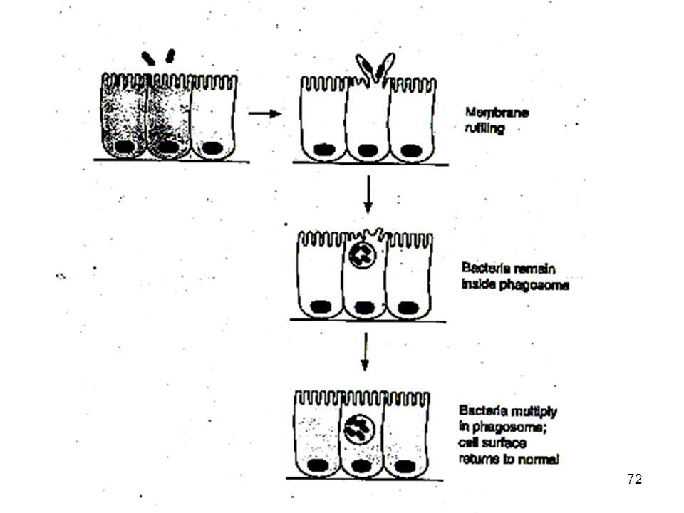 http://www.microbiologia.unige.it/dpb/debbia.htm Dinamica delle Popolazioni Batteriche Laboratorio di Microbiologia Sperimentale ed Epidemiologia 72