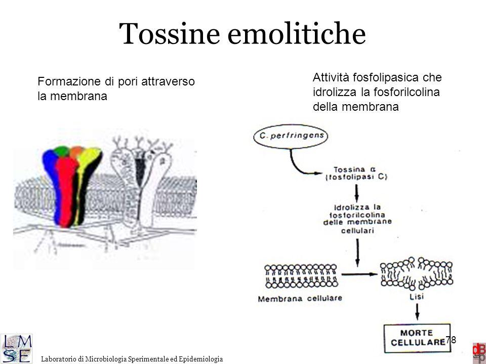 http://www.microbiologia.unige.it/dpb/debbia.htm Dinamica delle Popolazioni Batteriche Laboratorio di Microbiologia Sperimentale ed Epidemiologia Toss
