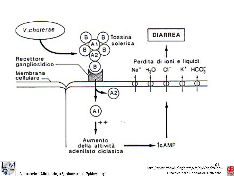 http://www.microbiologia.unige.it/dpb/debbia.htm Dinamica delle Popolazioni Batteriche Laboratorio di Microbiologia Sperimentale ed Epidemiologia 81