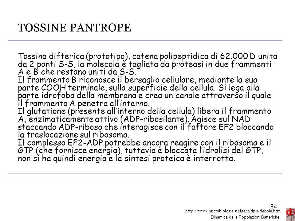 http://www.microbiologia.unige.it/dpb/debbia.htm Dinamica delle Popolazioni Batteriche TOSSINE PANTROPE Tossina difterica (prototipo), catena polipept