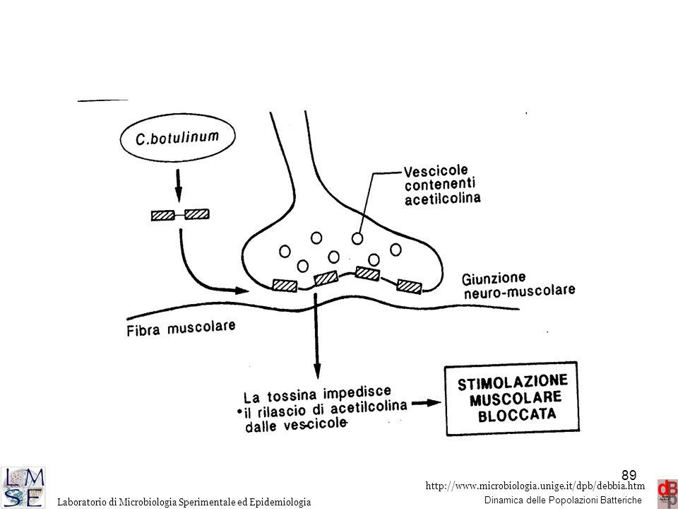 http://www.microbiologia.unige.it/dpb/debbia.htm Dinamica delle Popolazioni Batteriche Laboratorio di Microbiologia Sperimentale ed Epidemiologia 89