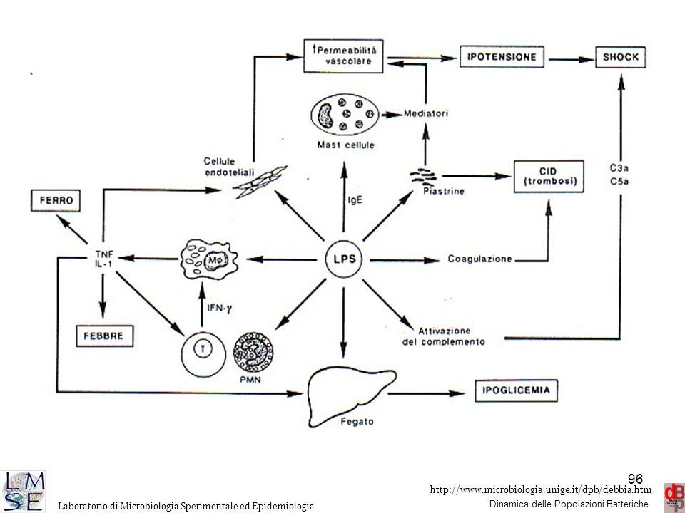 http://www.microbiologia.unige.it/dpb/debbia.htm Dinamica delle Popolazioni Batteriche Laboratorio di Microbiologia Sperimentale ed Epidemiologia 96