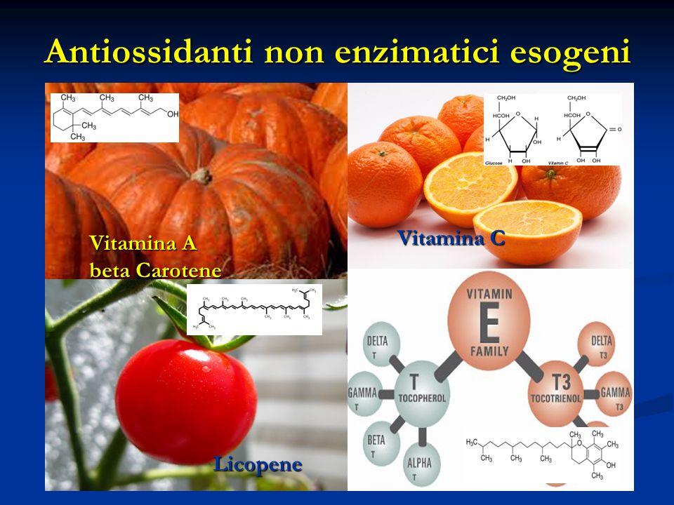 Antiossidanti non enzimatici esogeni Vitamina C Vitamina A beta Carotene Licopene