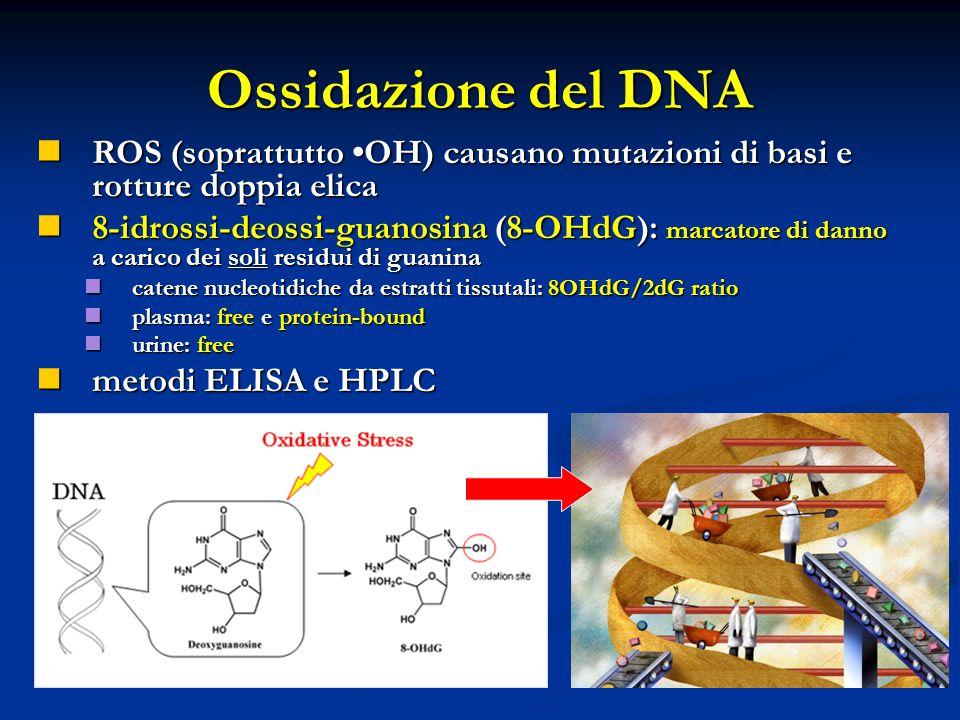 Ossidazione del DNA ROS (soprattutto OH) causano mutazioni di basi e rotture doppia elica 8-idrossi-deossi-guanosina (8-OHdG): marcatore di danno a carico dei soli residui di guanina catene nucleotidiche da estratti tissutali: 8OHdG/2dG ratio plasma: free e protein-bound urine: free metodi ELISA e HPLC