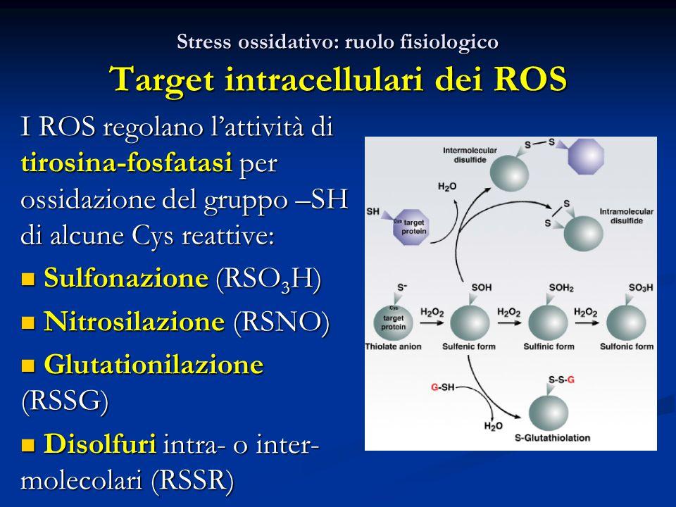 Stress ossidativo: ruolo fisiologico Target intracellulari dei ROS I ROS regolano l'attività di tirosina-fosfatasi per ossidazione del gruppo –SH di alcune Cys reattive: Sulfonazione (RSO 3 H) Sulfonazione (RSO 3 H) Nitrosilazione (RSNO) Nitrosilazione (RSNO) Glutationilazione (RSSG) Glutationilazione (RSSG) Disolfuri intra- o inter- molecolari (RSSR) Disolfuri intra- o inter- molecolari (RSSR)