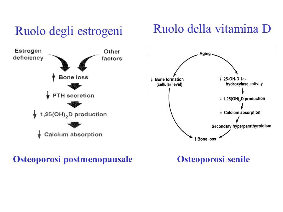 Ruolo del calcio Adeguato apporto di calcio: Essenziale per il raggiungimento di un adeguato picco di massa ossea Supplementazione calcica Riduce la perdita ossea, aumenta BMD e riduce l'incidenza di fratture nell'anziano Fabbisogno calcico giornaliero medio : 0 -6 mesi400 mg/die 6 - 12 mesi600 mg/die 1 - 10 anni800-1200 mg/die 11 -24 anni1200- 1500 mg/die uomini 25 - 65 anni1000 mg/die donne 25 - 50 anni 1000 mg/die donne gravide 1500 mg/die postmenopausa 1200 - 1500 mg/die uomini > 65 anni1500 mg/die