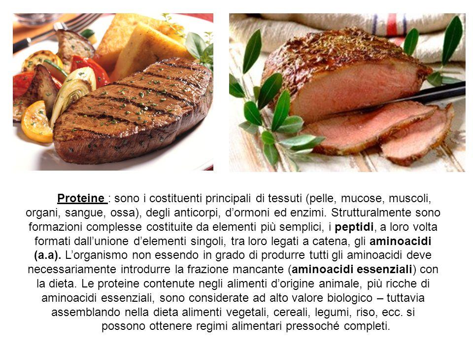 Proteine : sono i costituenti principali di tessuti (pelle, mucose, muscoli, organi, sangue, ossa), degli anticorpi, d'ormoni ed enzimi. Strutturalmen
