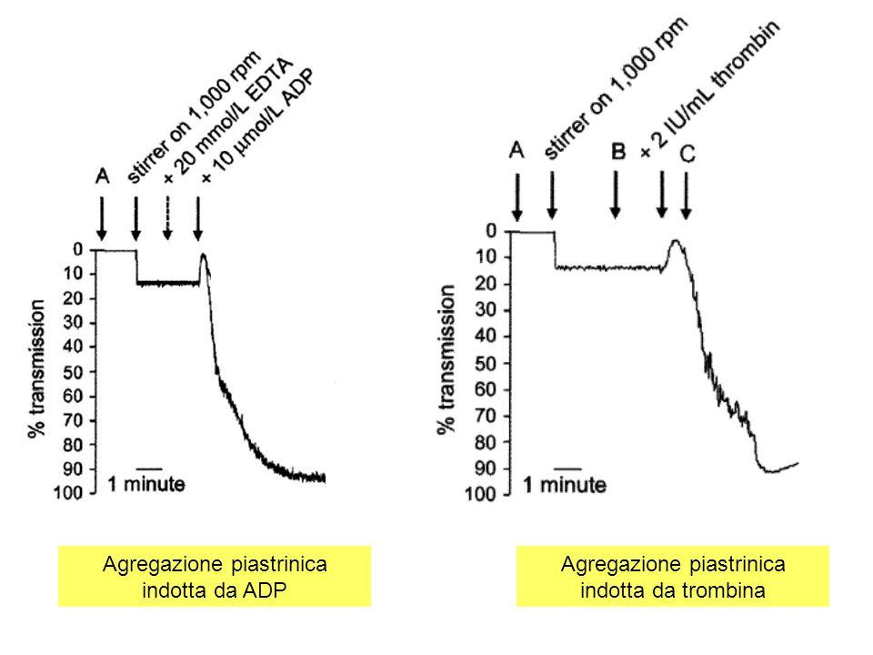 Agregazione piastrinica indotta da ADP Agregazione piastrinica indotta da trombina