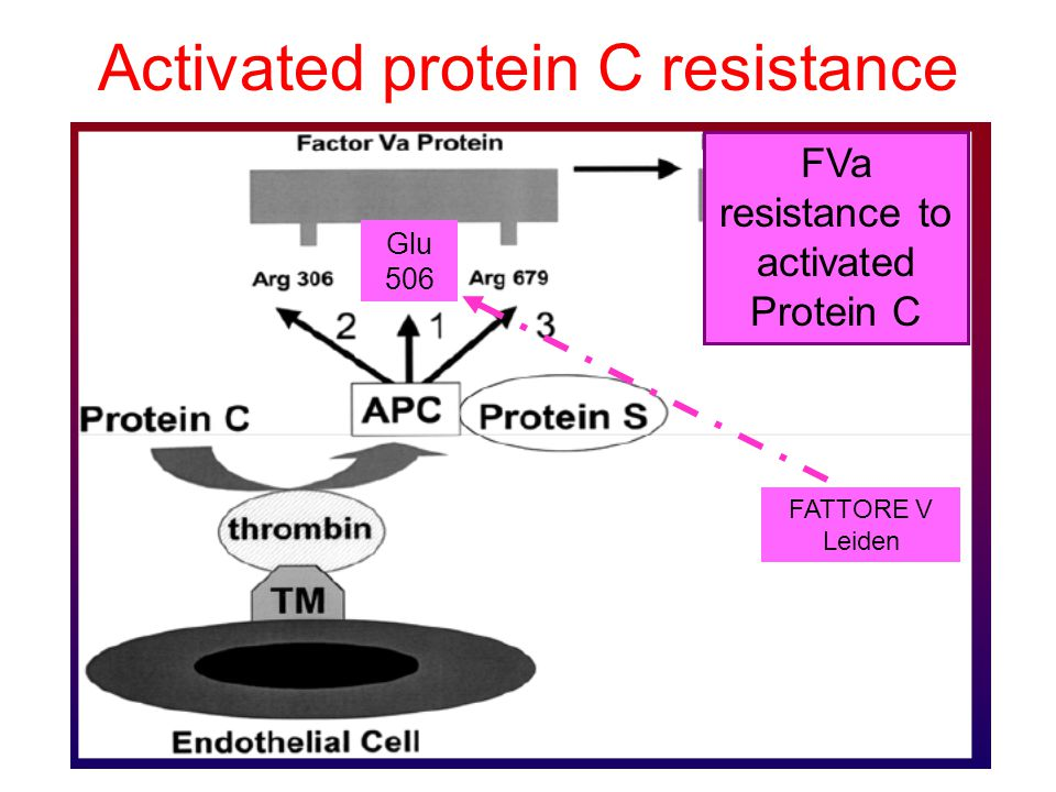 Activated protein C resistance Glu 506 FVa resistance to activated Protein C FATTORE V Leiden