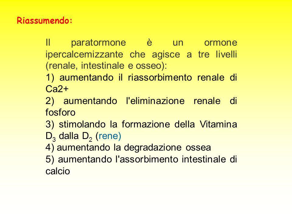 Il paratormone è un ormone ipercalcemizzante che agisce a tre livelli (renale, intestinale e osseo): 1) aumentando il riassorbimento renale di Ca2+ 2)