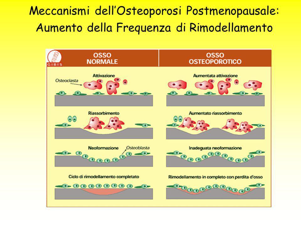 Meccanismi dell'Osteoporosi Postmenopausale: Aumento della Frequenza di Rimodellamento