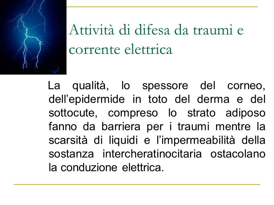Attività di difesa da traumi e corrente elettrica La qualità, lo spessore del corneo, dell'epidermide in toto del derma e del sottocute, compreso lo s