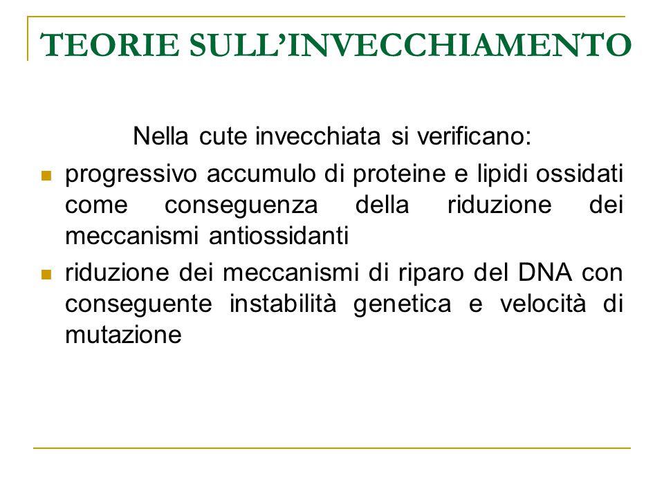 TEORIE SULL'INVECCHIAMENTO Nella cute invecchiata si verificano: progressivo accumulo di proteine e lipidi ossidati come conseguenza della riduzione d