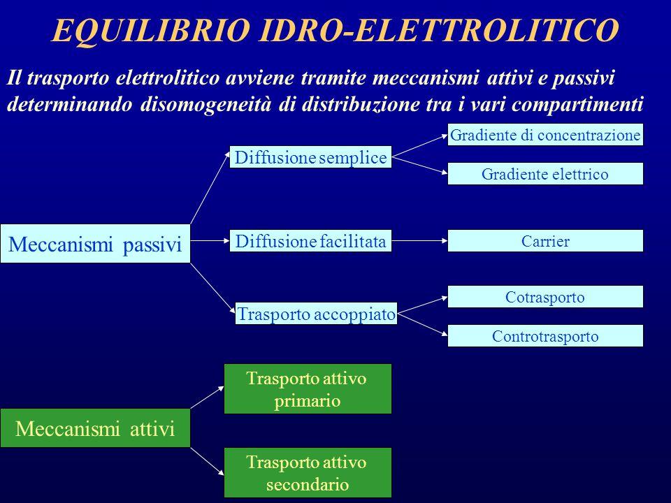 EQUILIBRIO IDRO-ELETTROLITICO Il trasporto elettrolitico avviene tramite meccanismi attivi e passivi determinando disomogeneità di distribuzione tra i vari compartimenti Meccanismi passivi Meccanismi attivi Diffusione semplice Diffusione facilitata Trasporto accoppiato Trasporto attivo primario Trasporto attivo secondario Gradiente di concentrazione Gradiente elettrico Carrier Cotrasporto Controtrasporto