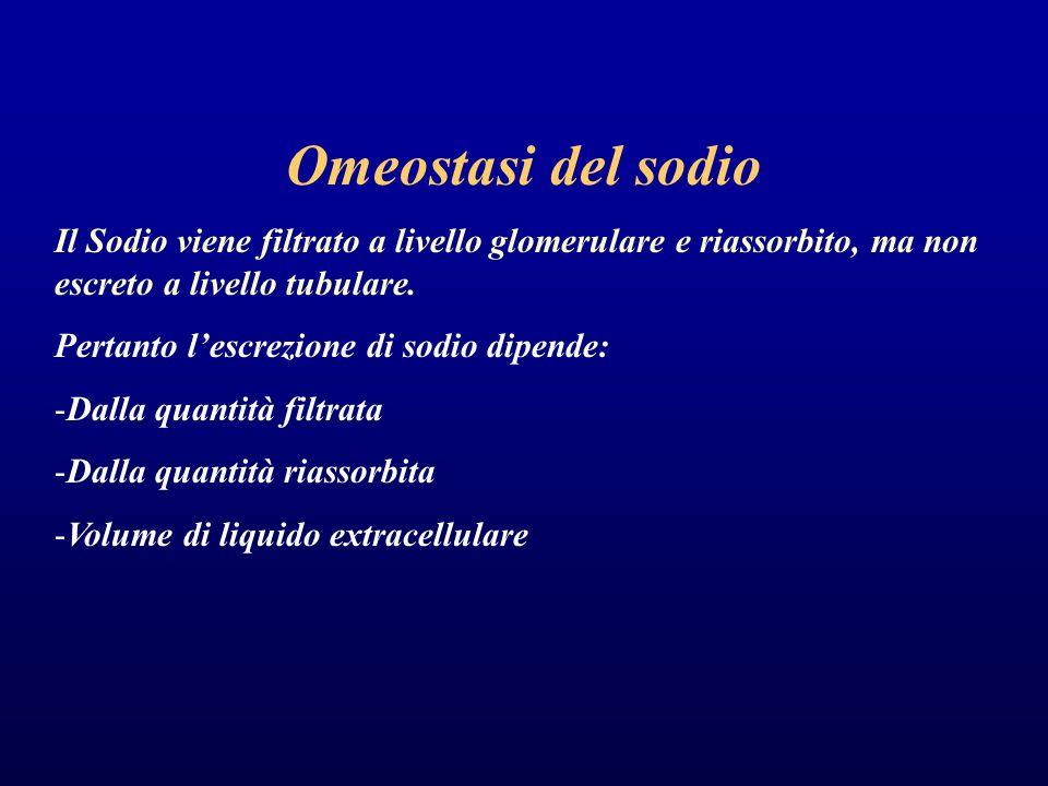 Omeostasi del sodio Il Sodio viene filtrato a livello glomerulare e riassorbito, ma non escreto a livello tubulare. Pertanto l'escrezione di sodio dip