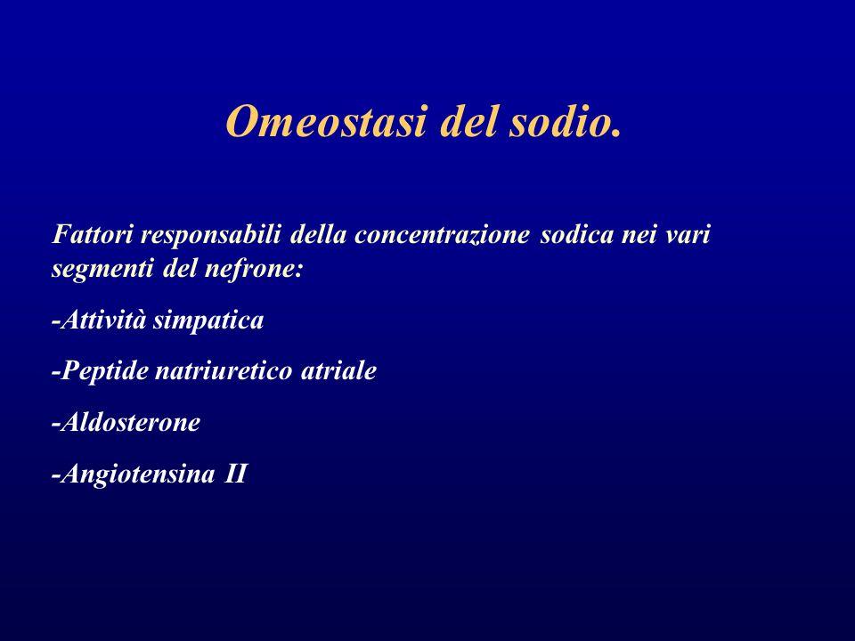 Omeostasi del sodio. Fattori responsabili della concentrazione sodica nei vari segmenti del nefrone: -Attività simpatica -Peptide natriuretico atriale