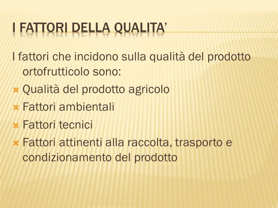 I fattori che incidono sulla qualità del prodotto ortofrutticolo sono:  Qualità del prodotto agricolo  Fattori ambientali  Fattori tecnici  Fattor