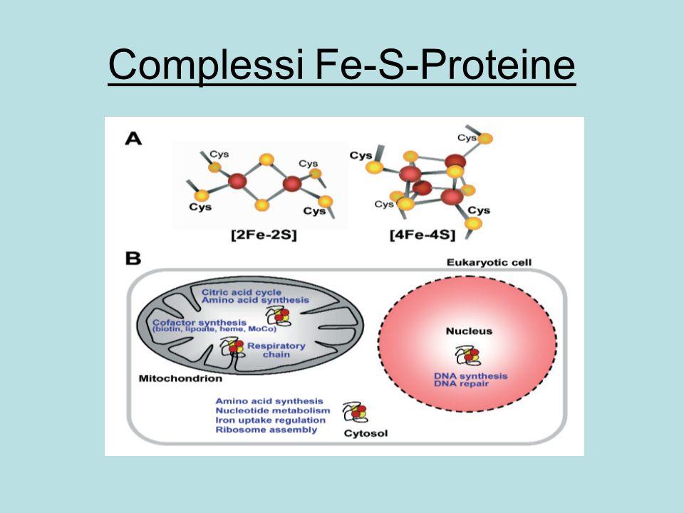 SR Plasma membrane Mitochondrion ROS Tethering protein DHPR T-tube Cytosol ATP synthesis Ca 2+ Myofilaments Ca 2+ Na + Ca 2+ OMM IMM CSMDH Figure 1 MCU MICU1 RyR mPTP NCLX DHPR RyR mPTP NCLX MCU MICU1 By the kind permission of my friend Masao Saotome Hamamatsu University