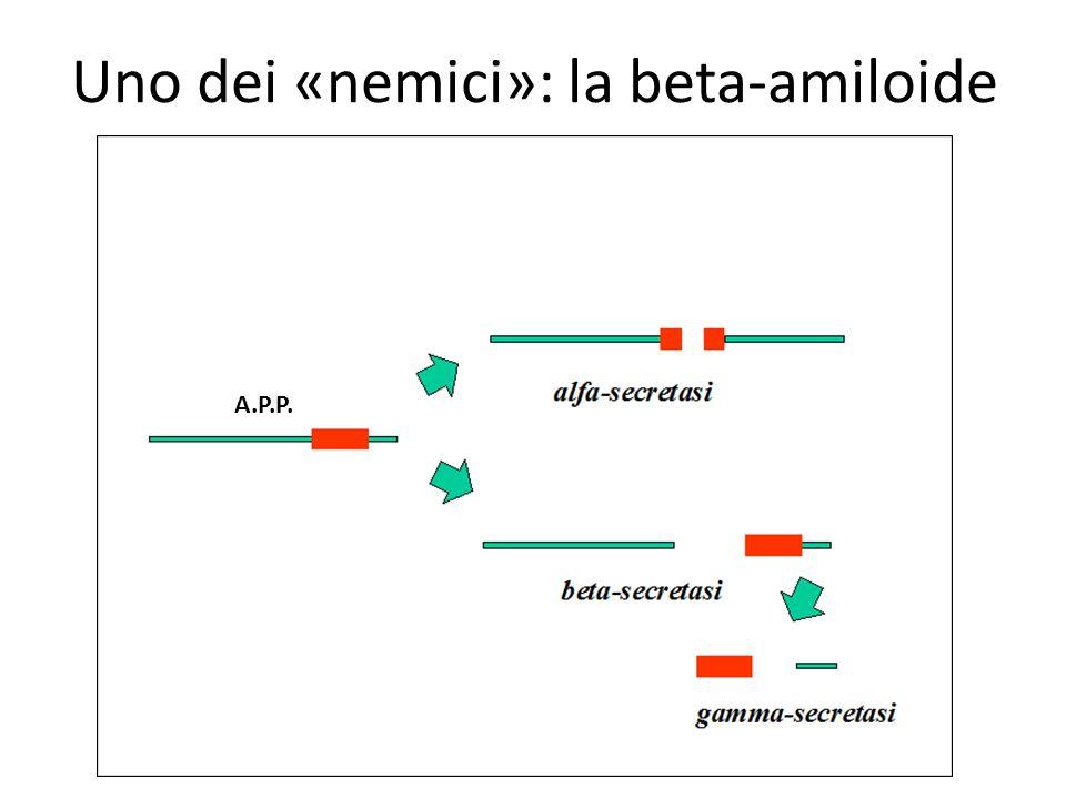 Uno dei «nemici»: la beta-amiloide A.P.P.