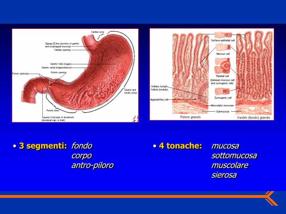 Stadiazione del tumore Il tumore viene classificato in base ai 3 elementi: T : la dimensione del tumore N : il coinvolgimento linfonodale M : le metastasi Tumore Noduli Metastasi Prognosi La stadiazione correla con la sopravvivenza MES Ott2007 Uso interno