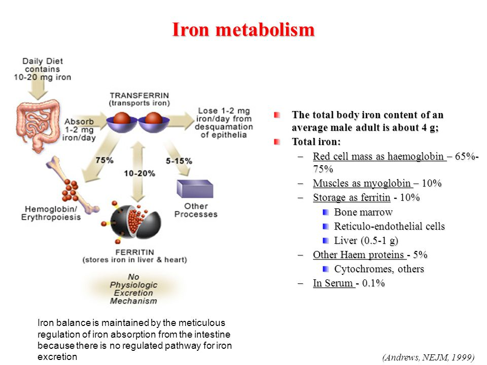 (Andrews, NEJM, 1999) Ironmetabolism Iron metabolism The total body iron content of an average male adult is about 4 g; Total iron: –Red cell mass as