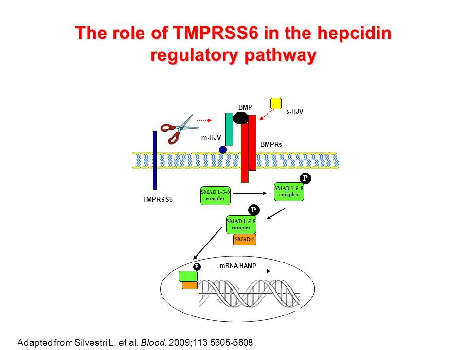 BMPRs BMP TMPRSS6 SMAD 1-5-8 complex SMAD 4 m-HJV SMAD 1-5-8 complex P SMAD 1-5-8 complex P P mRNA HAMP s-HJV Adapted from Silvestri L, et al.