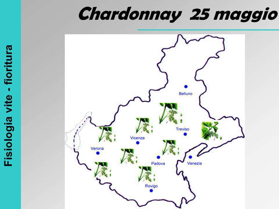 Fisiologia vite - fioritura Chardonnay 25 maggio